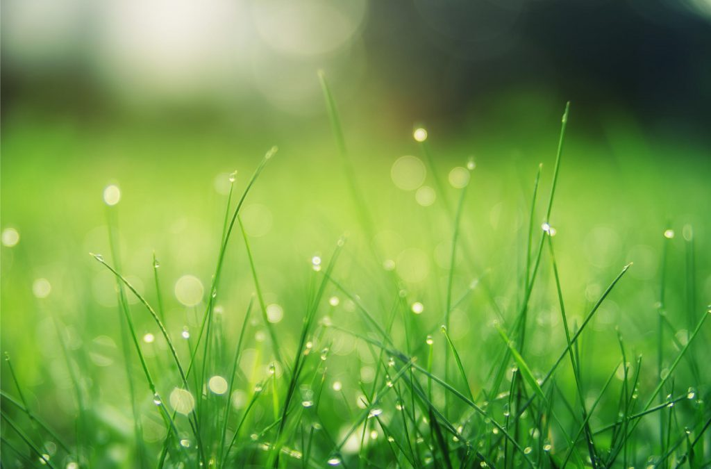 Spring and Fall professionally maintenance by Lc Lawn Care